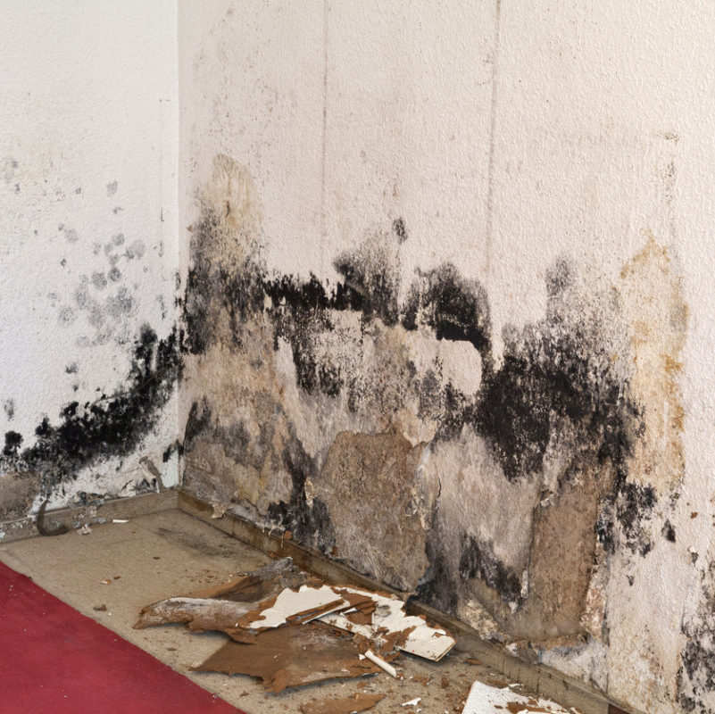 mold removal Madison WI