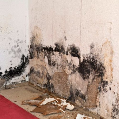 Mold Remediation in Madison, WI